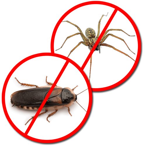 Pest Control Termite Extermination Amp Rodent Removal